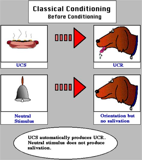 Classical Conditioning Essay by Classical Conditioning Research Paper