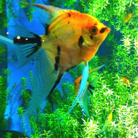 Lu Aquarium les 312 meilleures images du tableau aquarium aquascaping terrariums paludariums sur