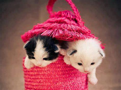 cute cat kitten image  pink beg