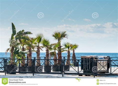 palme da terrazzo palme sul terrazzo fotografia stock immagine 49351779