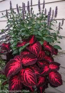 low sunlight plants best 25 low lights ideas on pinterest