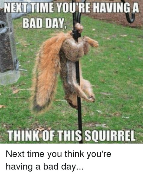 Me Next Time Meme - next time you re having a bad day think of this squirrel