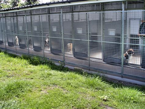 dog house boarding kennels facilities station house boarding kennels