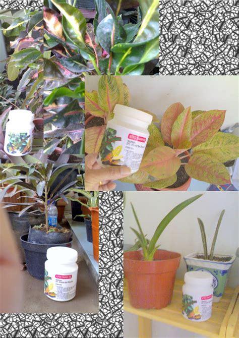 Pupuk Organik Untuk Pertumbuhan pupuk organik tanaman organik untuk tanaman
