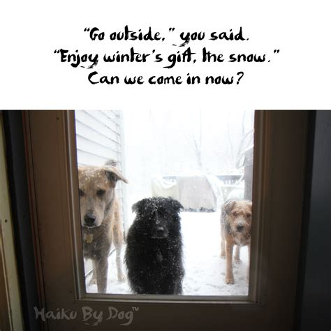 when can my puppy go outside haiku by outside with dogs and cats