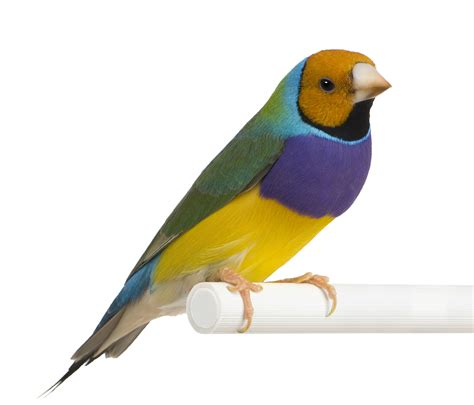 how to your bird guidelines for placing your bird petfinder