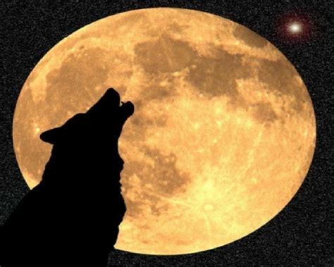 Wolf And Moon alert ashland wolf moon candlelight vigil tonight