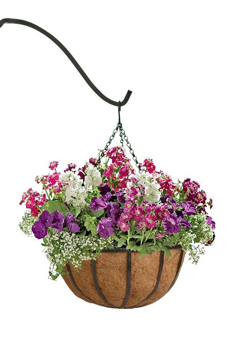 Hanging Flower Garden Best 25 Hanging Flower Baskets Ideas On Flower Baskets Hanging Baskets And