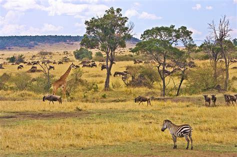 Safitri Syari safari 187 vacances arts guides voyages