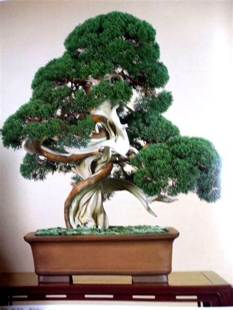 Bonsai Baum Arten by Types Of Bonsai Trees Shaping Aesthetics