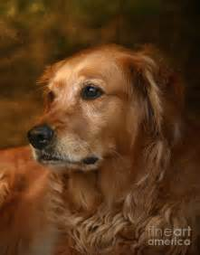 Golden retriever pictures to print www proteckmachinery com