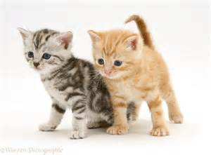 cat pictures kittens cats picture