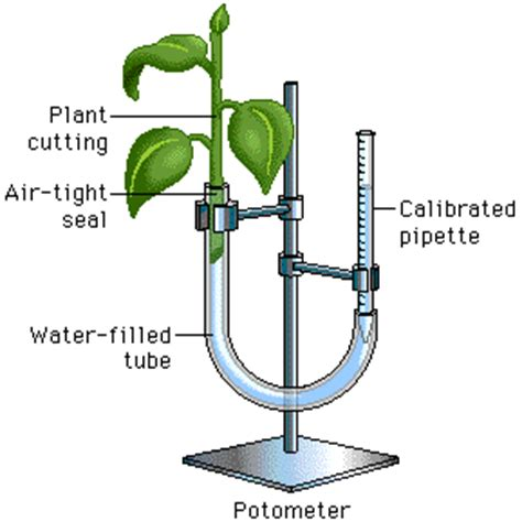 design an experiment using a seedling and a block of agar lab 9 transpiration exle 2 ap