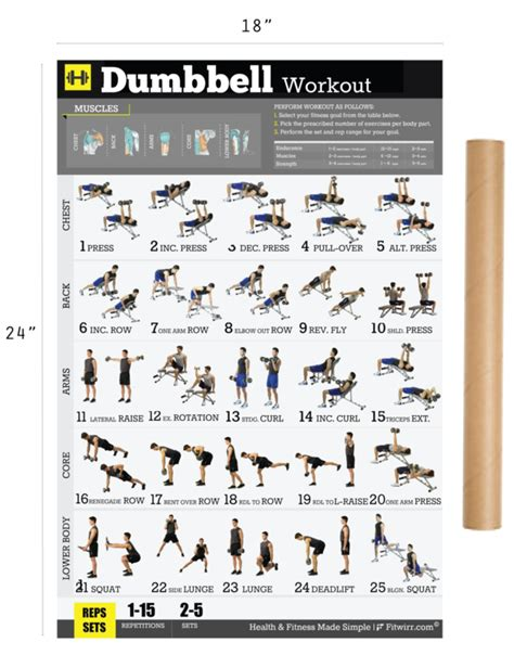 full body dumbbell workout no bench dumbbell workout exercise poster for men 18 quot x24 quot laminated