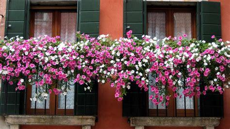 immagini di balconi fioriti la torre francavilla al via il concorso balconi fioriti