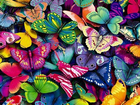 imagenes mariposas de colores brillantes 191 qu 233 hay en las alas de las mariposas fotos ecoosfera