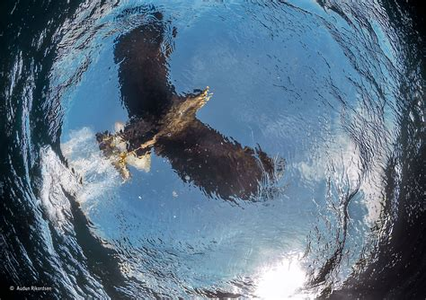 Landscape Photography Of The Year Exhibition Dive Audun Rikardsen The Wildlife Photographer Of
