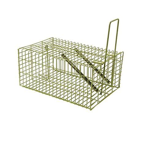 gabbia trappola per gatti gabbia trappola gatti roma usato vedi tutte i 71 prezzi