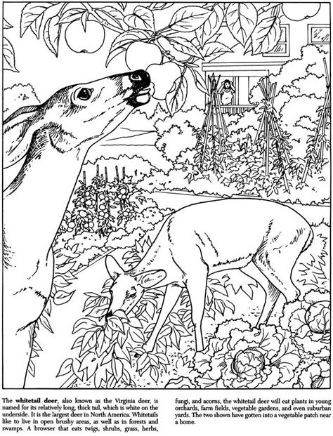 cats coloring book grayscale stress relief calming and relaxing coloring book portable books backyard nature white deer by dot barlowe