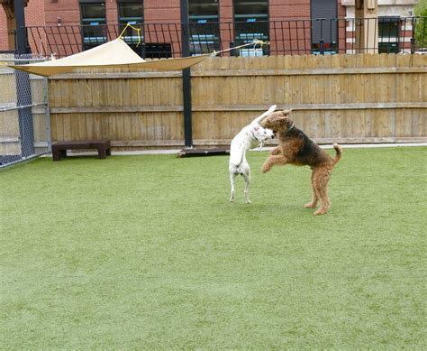 puppy day care chicago daycare services the place for your pet