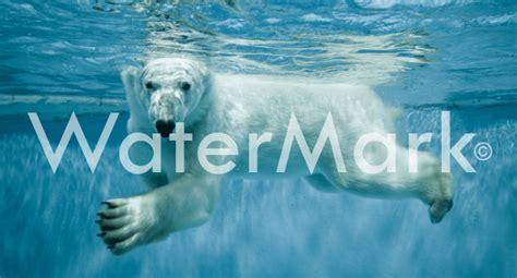 imagenes libres sin marca de agua c 243 mo a 241 adir marcas de agua a tus im 225 genes blog de wix