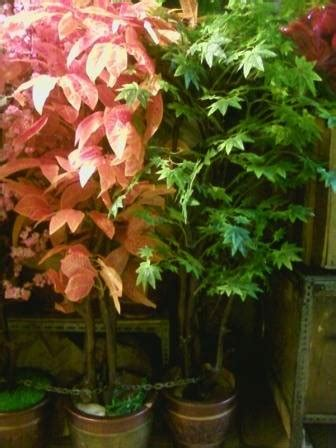 jual tanaman hias imitasi tanamanbaru