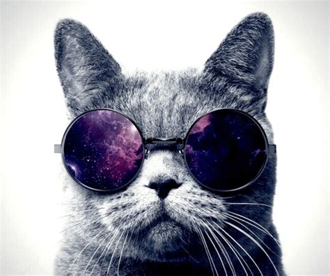 Cat With Glasses Black cat with glasses www pixshark images