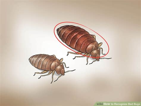 bed bugs shoes can bed bugs hide in shoes style guru fashion glitz
