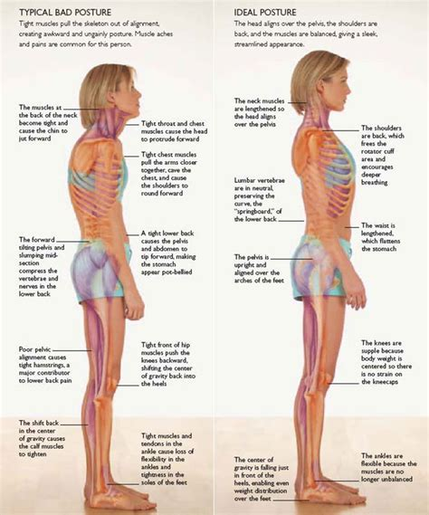 exercises for posture the stand program for better health through posture books 25 best ideas about posture stretches on
