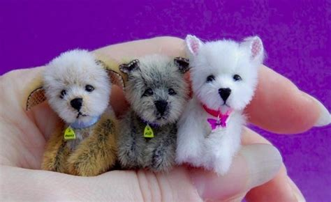 micro dogs dogs