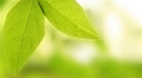 color psychology green psychology of the color green and its effect in interior