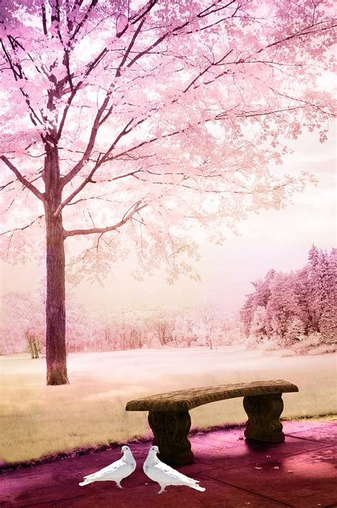 fantasy bench surreal fantasy park bench with white doves photograph by