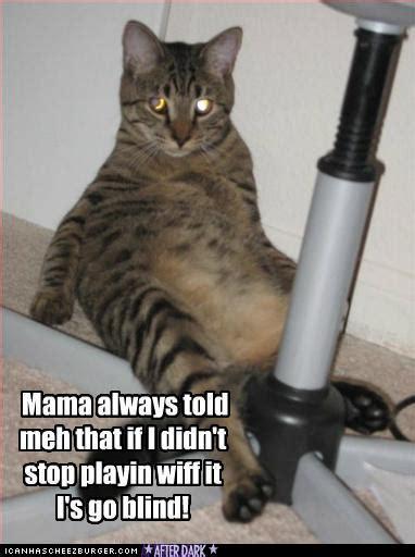 monster vibrator kitteh cheezburger funny