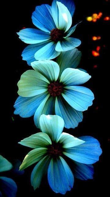 imagenes de flores azules brillantes bellas fotos de flores azules brillantes y naturales