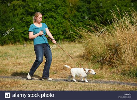 puppy pulling on leash parson terrier free animal pictures breeds picture