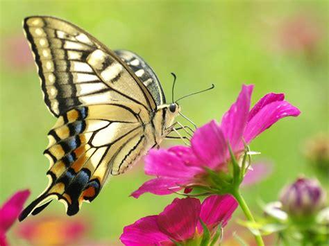 Imagenes Mariposas Bellas | bellas mariposas taringa