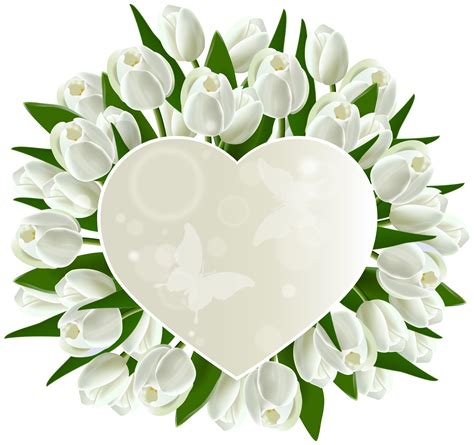 Aksesona Anting Flower Tulip Gold White Transparent white tulips decoration png clipart image gallery yopriceville high quality images and