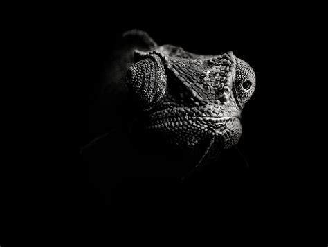 imagenes en negro hd wallpapers fondos negros hd para tu pc im 225 genes taringa