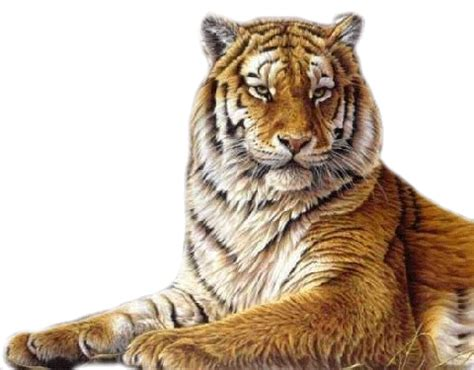 imagenes leones blancos movimiento zoom dise 209 o y fotografia tigres y leones png transparente