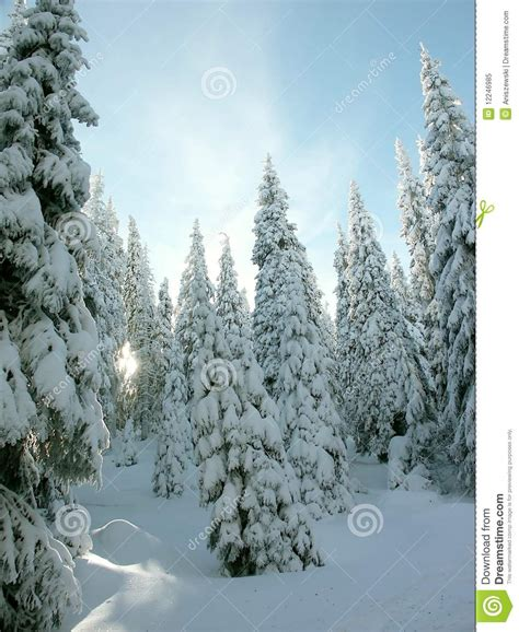 walmartcom mountain frost pine covered pine trees stock image image of silhouette 12246985