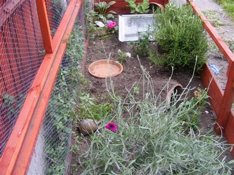 backyard tortoise outdoor tortoise enclosure backyard ideas pinterest