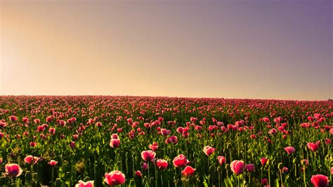 wallpaper notebook bunga tips tips kesehatan untuk anda 30 wallpaper bunga paling