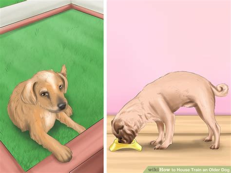 how do i house train an older dog how to house train an older dog with pictures wikihow