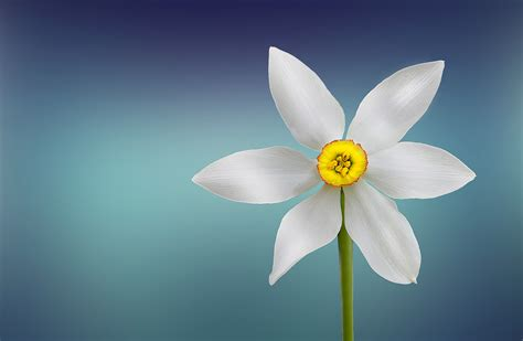 flower bloom white and yellow flower 183 free stock photo
