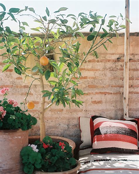 Patio Orange Tree by Small Balcony Design Ideas Photos And Inspiration