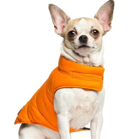 free pattern chihuahua clothes chihuahua clothing patterns thriftyfun