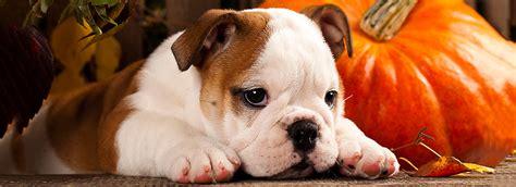 free puppy classes at petsmart tricks petsmart