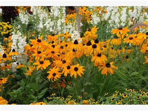 Garten Hohe Pflanzen by Robuste Stauden F 252 R Den Garten Mein Sch 246 Ner Garten