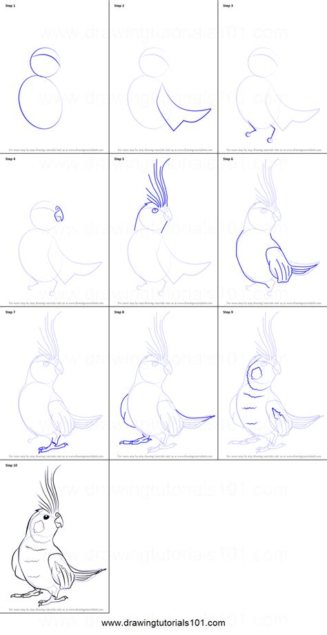 how to make doodle step by step how to draw a cockatiel printable step by step drawing