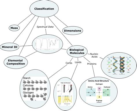 Mba 2 Biological Molecules by Classification